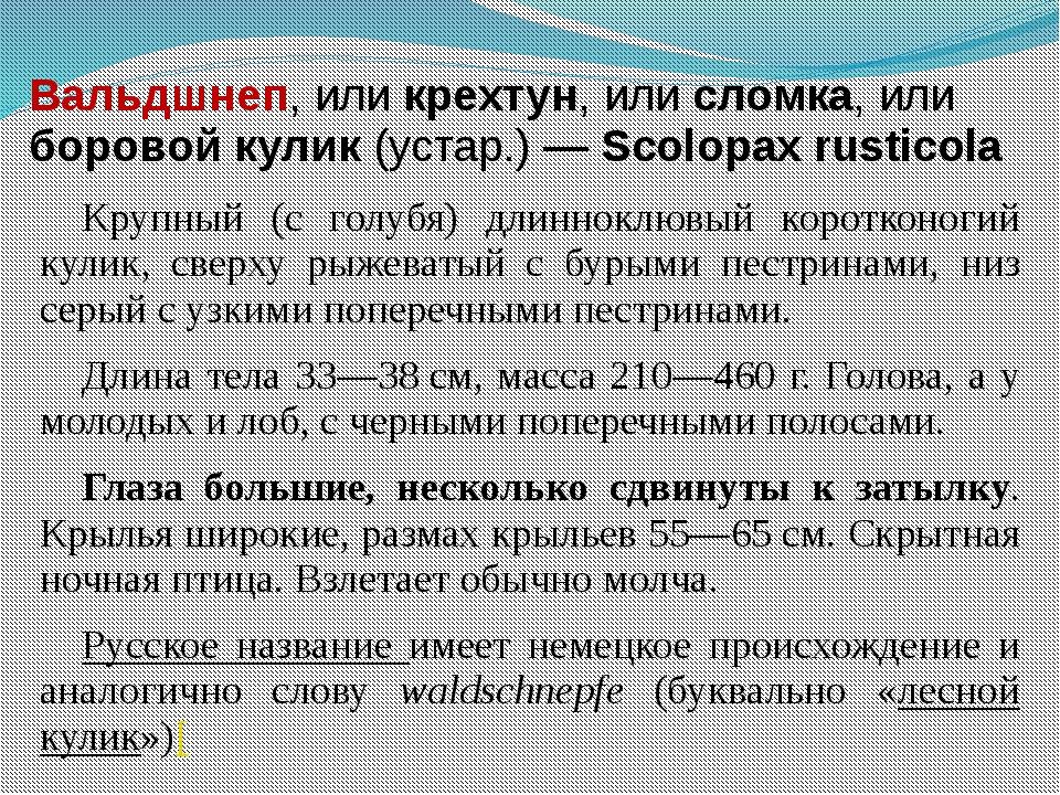 Вальдшнеп, или крехтун, или сломка, или боровой кулик (устар.) — Scolopax rus...