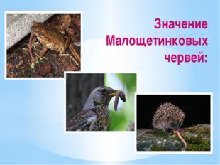 Значение Малощетинковых червей: