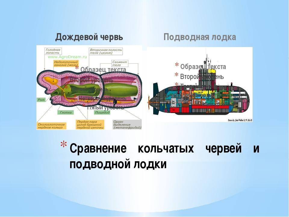 Дождевой червь Подводная лодка Сравнение кольчатых червей и подводной лодки