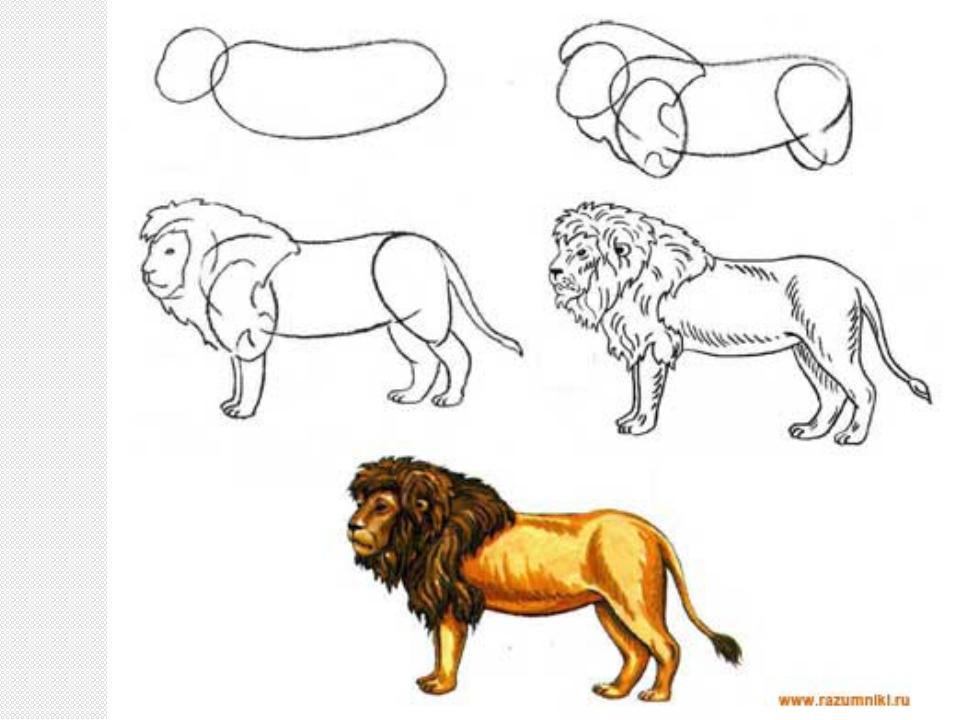 Как научиться рисовать львов
