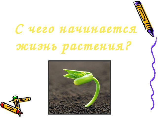 С чего начинается жизнь растения?