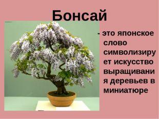 Бонсай - это японское слово символизирует искусство выращивания деревьев в ми