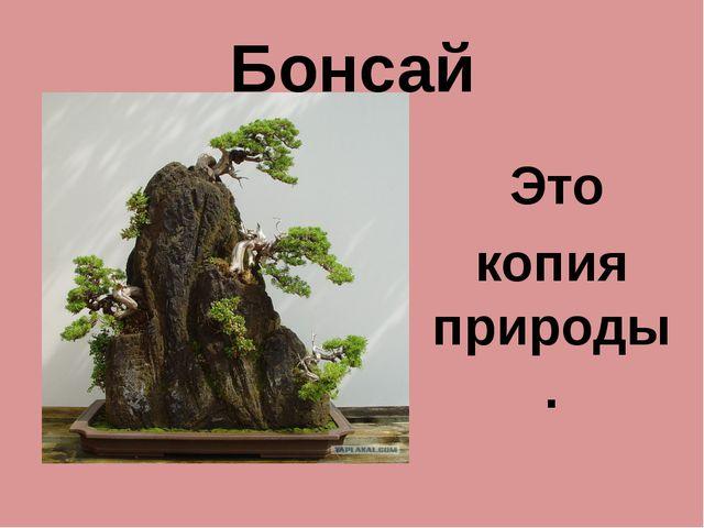 Бонсай Это копия природы.