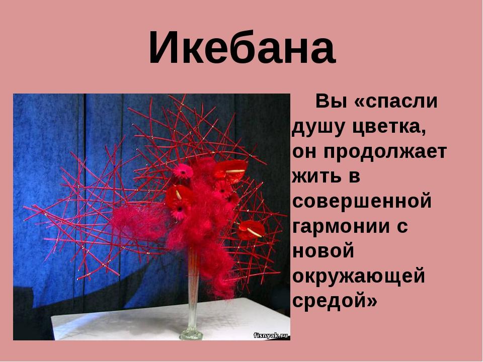 Икебана Вы «спасли душу цветка, он продолжает жить в совершенной гармонии с н...