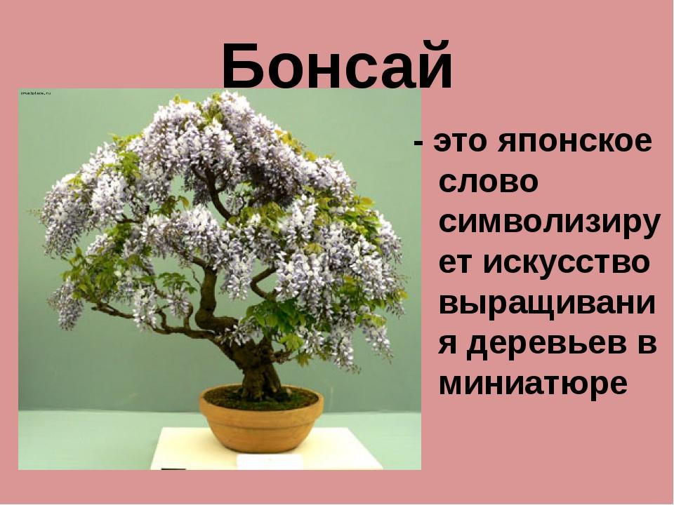 Бонсай - это японское слово символизирует искусство выращивания деревьев в ми...