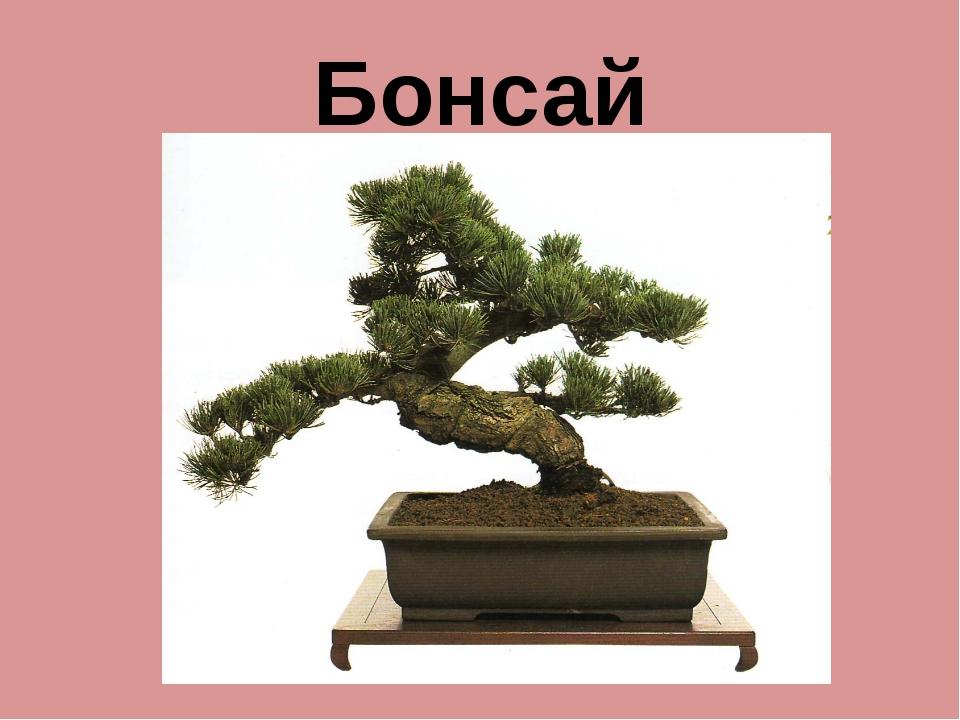 Бонсай