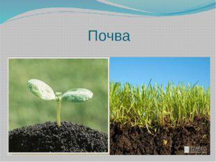 Почва