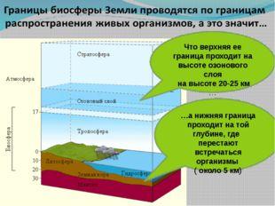 …а нижняя граница проходит на той глубине, где перестают встречаться организ