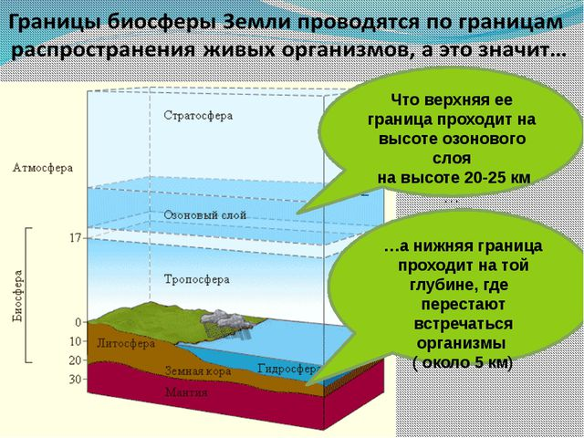 …а нижняя граница проходит на той глубине, где перестают встречаться организ...