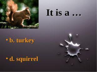 It is a … b. turkey d. squirrel