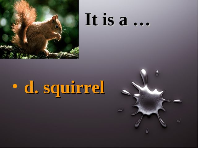 It is a … d. squirrel