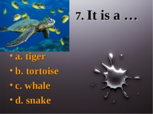 7. It is a … a. tiger b. tortoise c. whale d. snake
