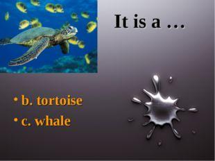 It is a … b. tortoise c. whale