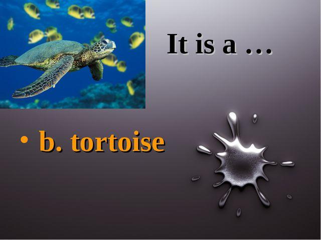 It is a … b. tortoise