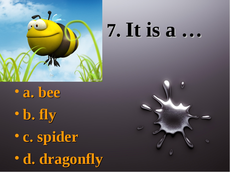 7. It is a … a. bee b. fly c. spider d. dragonfly