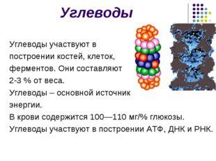 Углеводы Углеводы участвуют в построении костей, клеток, ферментов. Они соста