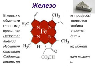 Железо В живых организмах железо катализирует процессы обмена кислородом (дых