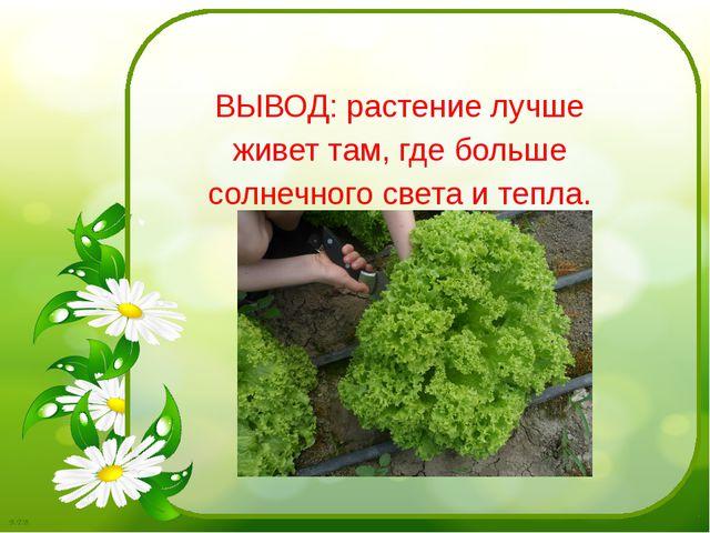 ВЫВОД: растение лучше живет там, где больше солнечного света и тепла. Б.Т.В.