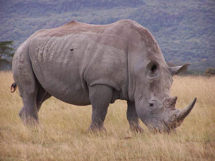 объёмные крупные животные из бисера