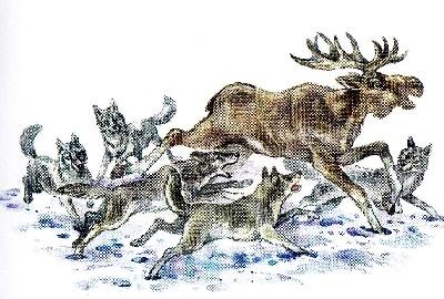 как охотятся волки, охота, волк