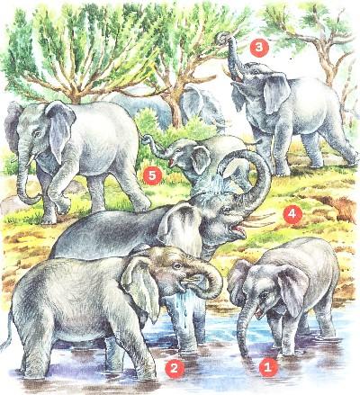 для чего слону хобот, рассказы о животных детям