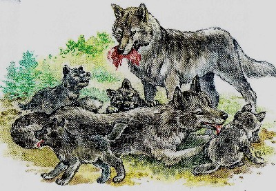 волчата, волчья стая