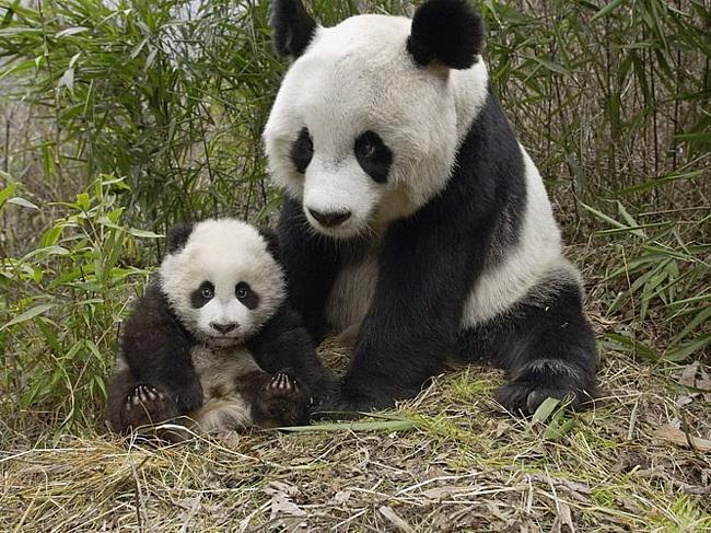 Обои в мире забавных животных часть 51 скачать бесплатно, без регистрации и смс