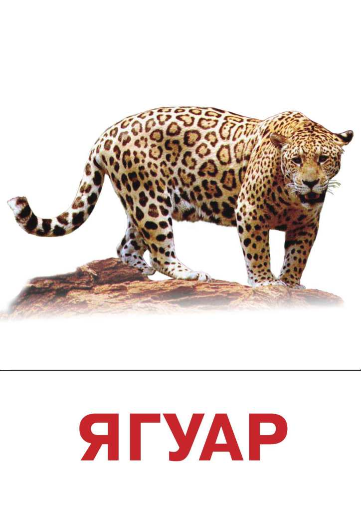 jaguar essay Excerpt from essay : economy impact on jlr economy and jaguar land rover impact of the economy on jaguar land rover (jlr) auto manufacturers are among the most far-reaching companies because the majority are large multinational corporations.