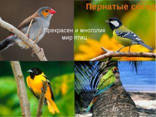 Пернатые соседи Прекрасен и многолик мир птиц