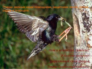 Птицы- верные наши помощники, защитники лесов, полей, садов и огородов. Нам в