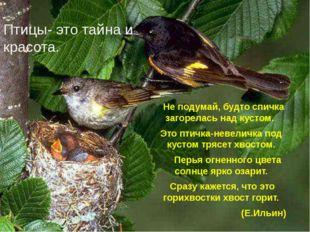 Птицы- это тайна и красота. Не подумай, будто спичка загорелась над кустом. Э