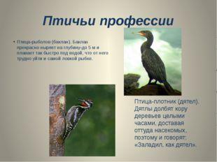 Птичьи профессии Птица-рыболов (баклан). Баклан прекрасно ныряет на глубину-д