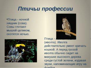 Птичьи профессии Птица - ночной хищник (сова). Совы глотают мышей целиком, ох
