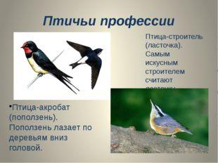 Птичьи профессии Птица-строитель (ласточка). Самым искусным строителем считаю