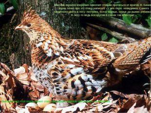 Внешний вид этой птицы может стать признаком, важным при выборе ее названия.