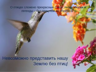 О птицах сложено прекрасные стихи, песни, сказки и легенды – без птиц нам не