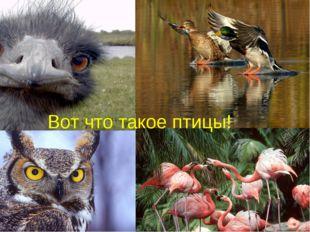 Вот что такое птицы!