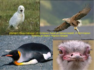 Обитают птицы повсюду - от полярных льдов до бурных морей, от бесплодных пуст