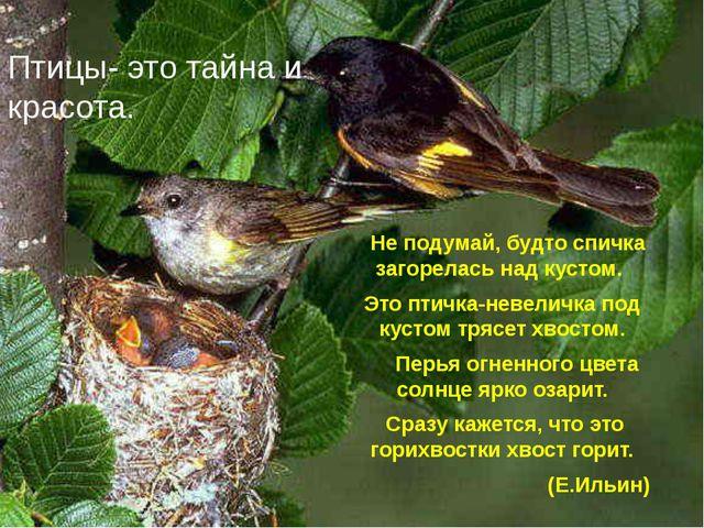 Птицы- это тайна и красота. Не подумай, будто спичка загорелась над кустом. Э...