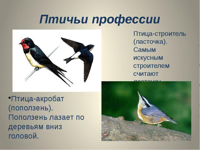 Птичьи профессии Птица-строитель (ласточка). Самым искусным строителем считаю...