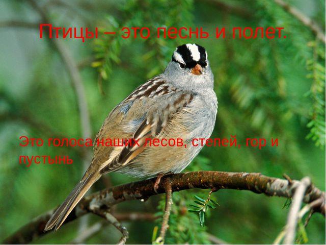Птицы – это песнь и полет. Это голоса наших лесов, степей, гор и пустынь