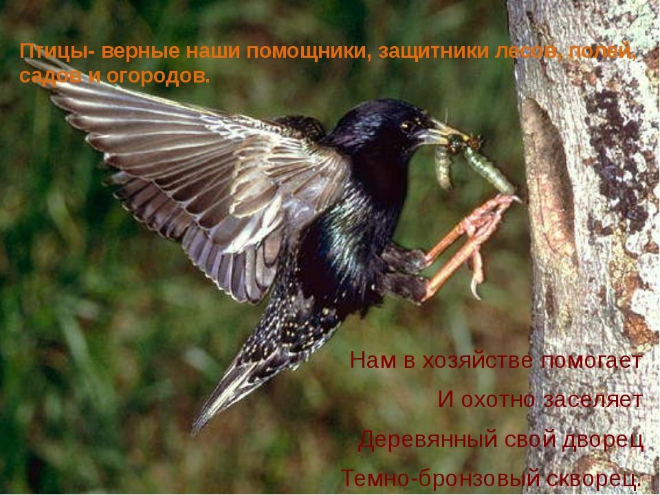 Птицы- верные наши помощники, защитники лесов, полей, садов и огородов. Нам в...
