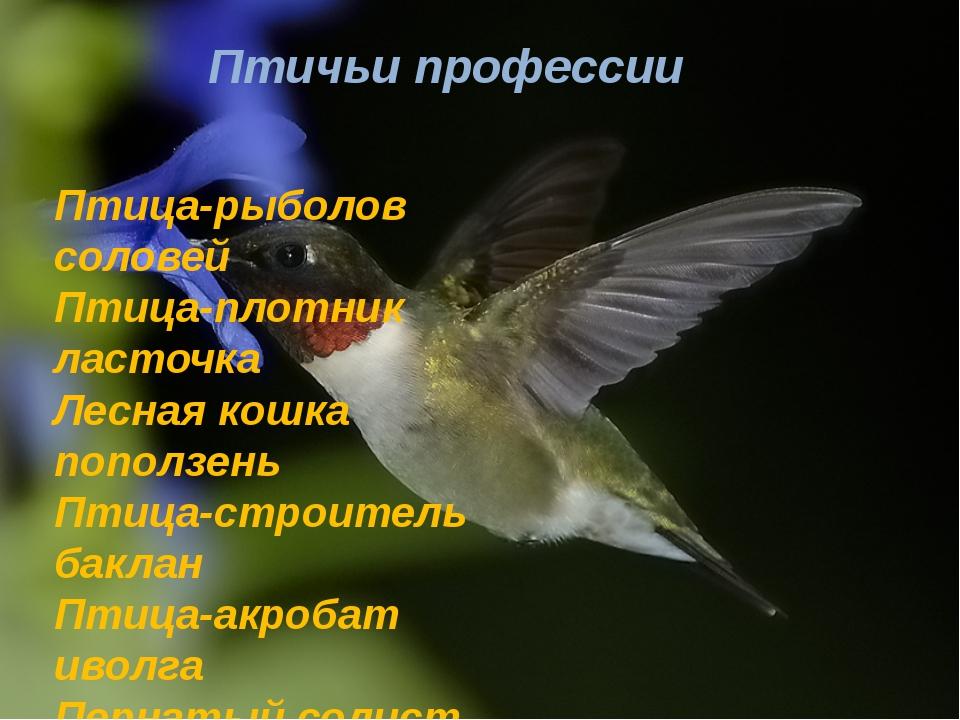 Птичьи профессии Птица-рыболов соловей Птица-плотник ласточка Лесная кошка по...