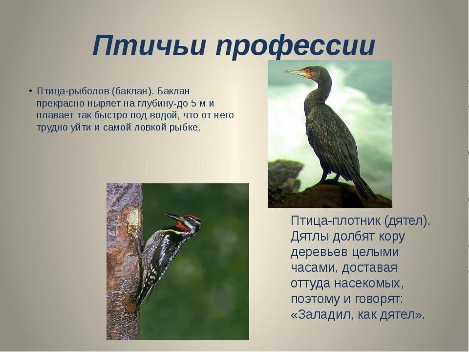 Птичьи профессии Птица-рыболов (баклан). Баклан прекрасно ныряет на глубину-д...