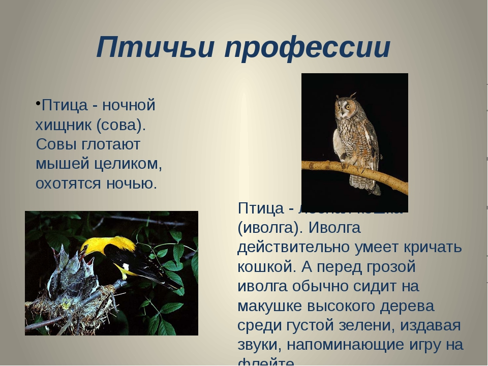 Птичьи профессии Птица - ночной хищник (сова). Совы глотают мышей целиком, ох...
