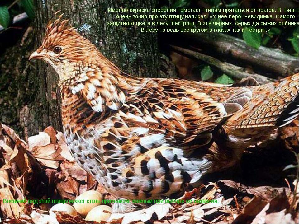 Внешний вид этой птицы может стать признаком, важным при выборе ее названия....