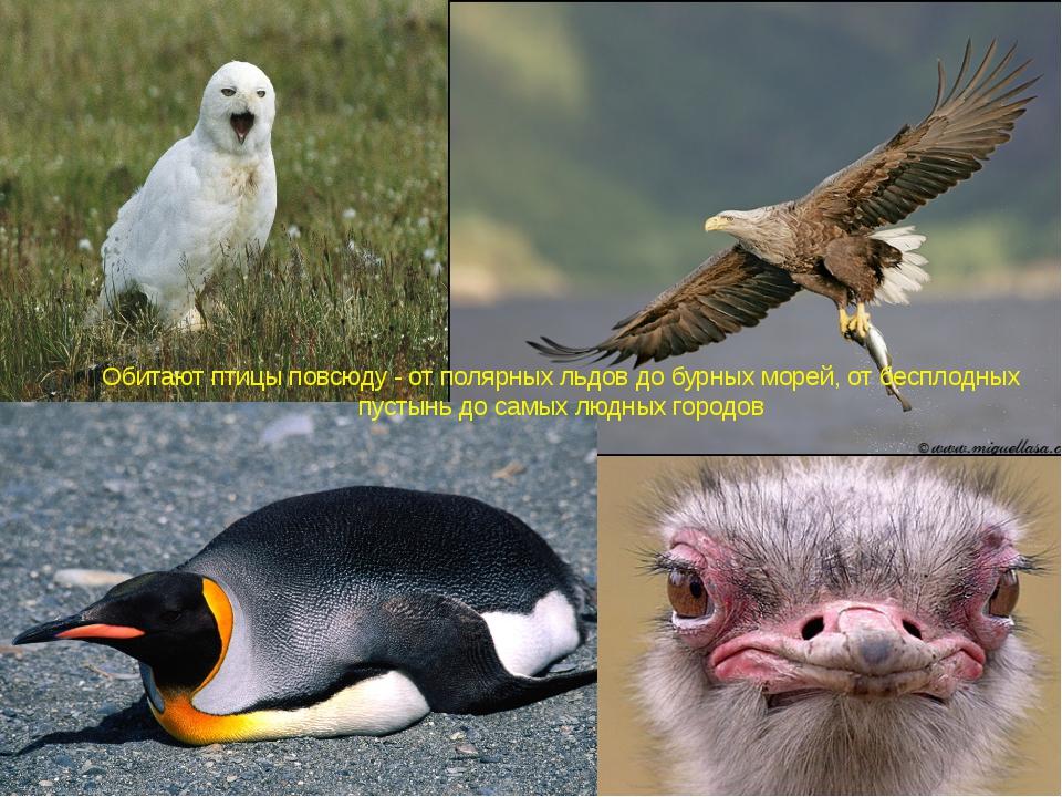 Обитают птицы повсюду - от полярных льдов до бурных морей, от бесплодных пуст...