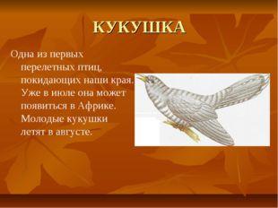КУКУШКА Одна из первых перелетных птиц, покидающих наши края. Уже в июле она