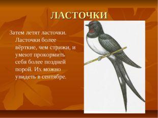 ЛАСТОЧКИ Затем летят ласточки. Ласточки более вёрткие, чем стрижи, и умеют пр