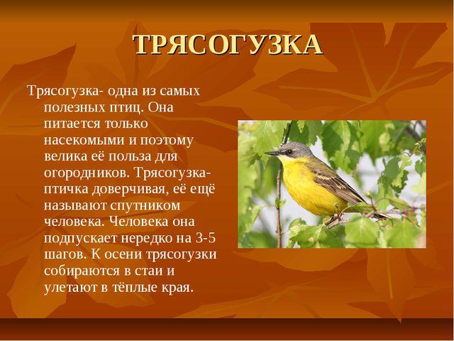 ТРЯСОГУЗКА Трясогузка- одна из самых полезных птиц. Она питается только насек...